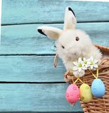Conejito divertido de Pascua en cesta y los huevos de Pascua Fondo de Pascua Fotos de archivo