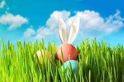 Conejito divertido de Pascua en hierba verde con los huevos de Pascua Fondo de Pascua Foto de archivo