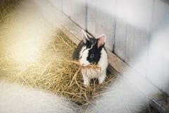 Conejito en granja Foto de archivo libre de regalías