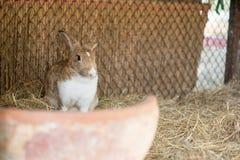Conejito en un aparador de conejo Fotografía de archivo libre de regalías