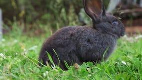 Conejito gris en una hierba almacen de video