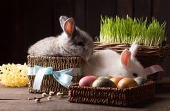 Conejito lindo de dos pascua con los huevos coloreados fotografía de archivo