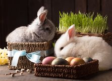 Conejito lindo de dos pascua con los huevos coloreados fotos de archivo libres de regalías