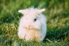 Conejito mullido blanco miniatura decorativo de orejas ca3idas enano del conejo fotos de archivo