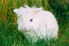 Conejito mullido blanco miniatura decorativo enano lindo cercano del conejo imágenes de archivo libres de regalías