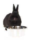Conejito negro con el tazón de fuente del agua Fotografía de archivo libre de regalías
