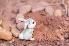 Conejito que entra la madriguera de conejo Imágenes de archivo libres de regalías