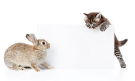 Conejito y gatito Foto de archivo