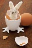Conejito y huevos de pascua Imagen de archivo libre de regalías