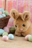 Conejito y huevos de pascua Imagenes de archivo