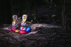 Conejito y huevos de pascua del chocolate ocultados por un árbol imagenes de archivo