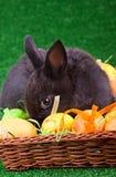 Conejito y huevos de Pascua tímidos Fotos de archivo libres de regalías