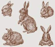 conejitos ilustración del vector