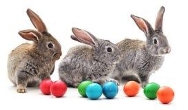 Conejitos de pascua con los huevos coloreados Foto de archivo libre de regalías