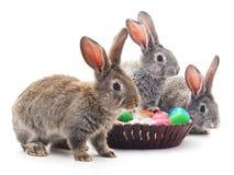 Conejitos de pascua con los huevos coloreados Foto de archivo