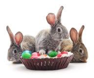 Conejitos de pascua con los huevos coloreados Fotos de archivo libres de regalías