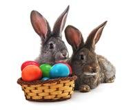 Conejitos de pascua con los huevos coloreados Imagen de archivo libre de regalías