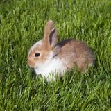 Conejo foto de archivo