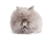 Conejo. Imagen de archivo libre de regalías