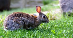 Conejo Fotos de archivo