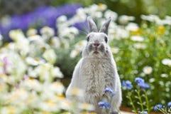 Conejo, fotos de archivo libres de regalías