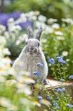 Conejo, Foto de archivo