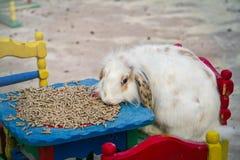 Conejo Imagenes de archivo