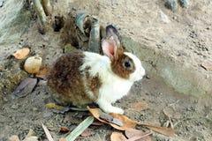 Conejo Imagen de archivo libre de regalías