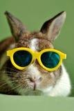 Conejo Fotografía de archivo