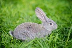 Conejo imágenes de archivo libres de regalías