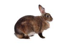 Conejo adorable Fotografía de archivo libre de regalías