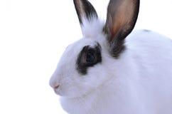 Conejo adorable aislado en un fondo blanco Imágenes de archivo libres de regalías