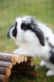 Conejo afuera Fotografía de archivo libre de regalías