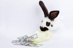 Conejo blanco Imagen de archivo libre de regalías