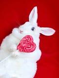 Conejo blanco aislado en el rojo que sostiene una piruleta en forma de corazón Imagenes de archivo