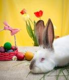 Conejo blanco con los huevos de Pascua Fotografía de archivo