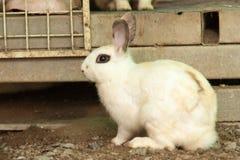 Conejo blanco con los ojos grandes que se sientan en la jaula imagen de archivo libre de regalías