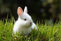 Conejo blanco del bebé en hierba Imágenes de archivo libres de regalías