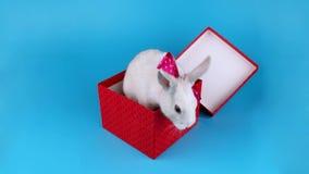 Conejo blanco divertido con el arco rosado, actual caja de apertura almacen de metraje de vídeo