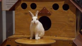 Conejo blanco en el zoo-granja almacen de video