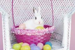 Conejo blanco en la cesta de Pascua con los huevos de Pascua Imagenes de archivo