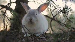 Conejo blanco en un bosque del verano almacen de metraje de vídeo