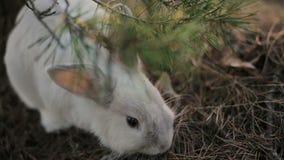 Conejo blanco en un bosque del verano metrajes