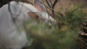 Conejo blanco en un bosque del verano almacen de video