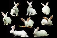 Conejo blanco en un fondo negro Imágenes de archivo libres de regalías