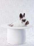 Conejo blanco en un sombrero blanco Foto de archivo
