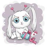 Conejo blanco hermoso con la caja de regalo Foto de archivo