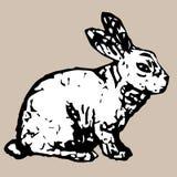 Conejo blanco lindo que se sienta Imágenes de archivo libres de regalías