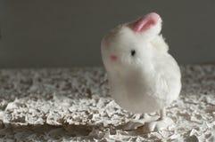 Conejo blanco mullido en conejito del juguete del fondo Foto de archivo libre de regalías
