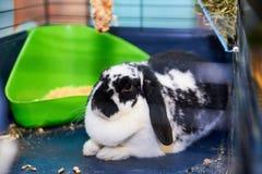 Conejo blanco y negro Imágenes de archivo libres de regalías